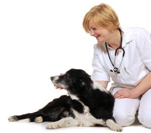 Vår veterinär